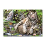 White Tigers of Bengal (1000pc)